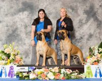 jenkins-family-bullmastiffs.jpg